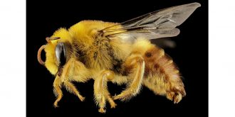 Should I mind my own Beeswax?
