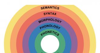 The Role of Semantics in Speaking Classes