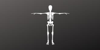 Flesh the Skeleton