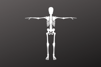 Flesh the Skeleton